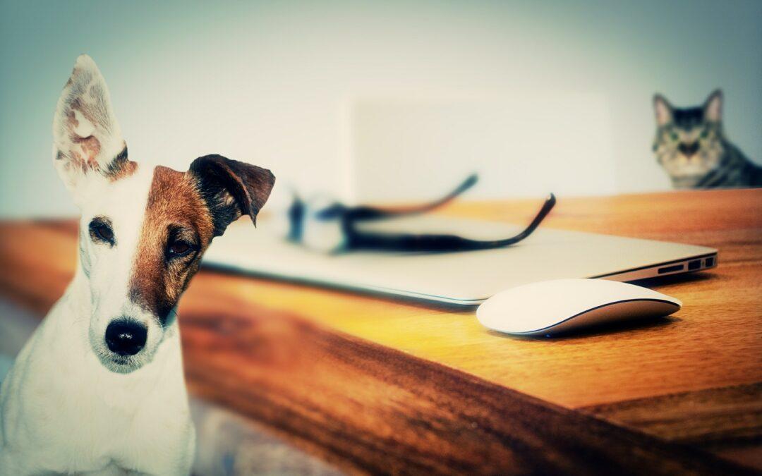 Arbejd hjemmefra med kæledyr