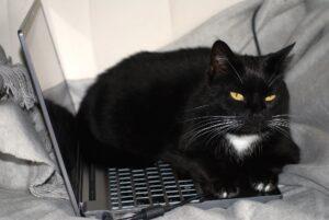 kat_arbejde_computer