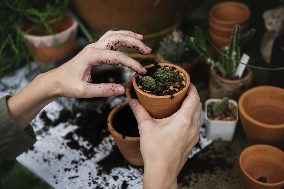 Kom godt i gang med en blog om din have
