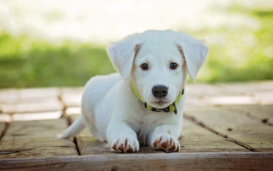 Har du overvejet at starte en blog om hunde?