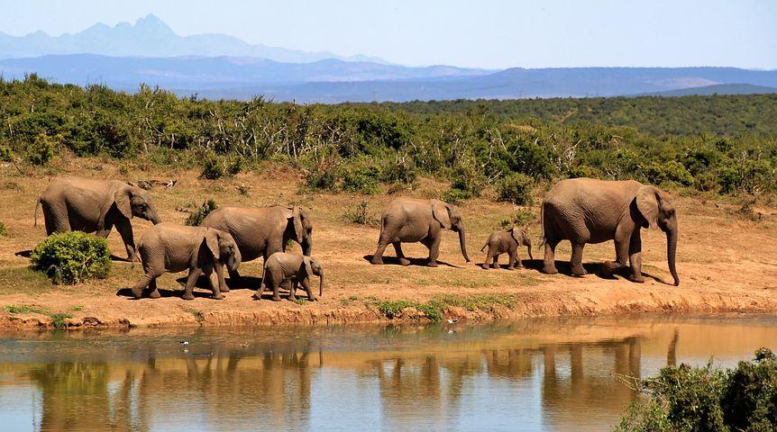 Oplev Sydafrikas safari